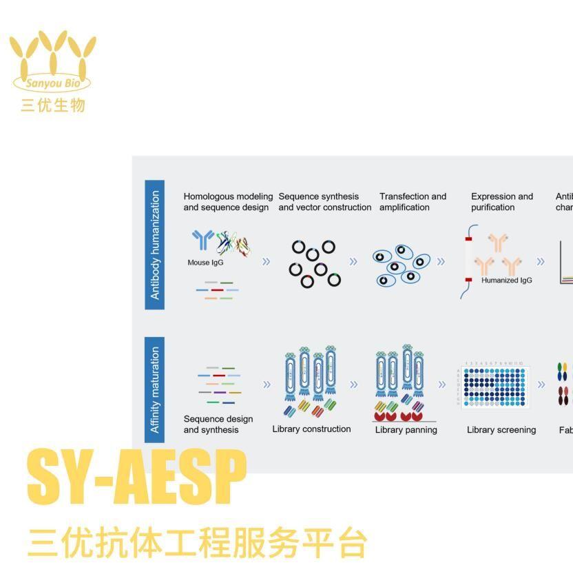 抗体制备及抗体人源化服务