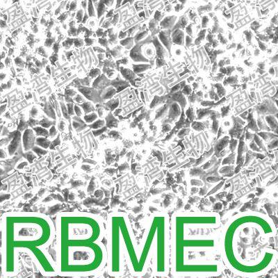 RBMEC大鼠脑微血管内皮细胞