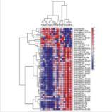 microRNA PCR芯片检测服务
