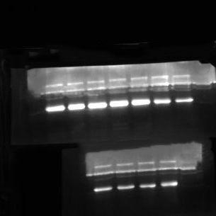 蛋白双向(2-D)电泳实验服务