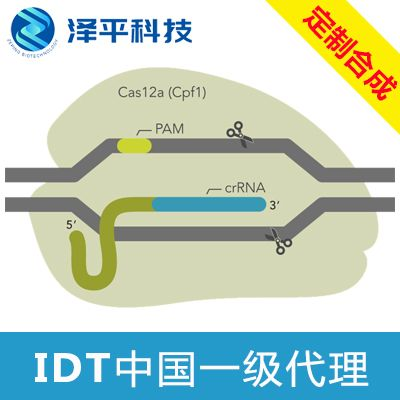 IDT Alt-R® Cpf1 Electroporation Enhancer