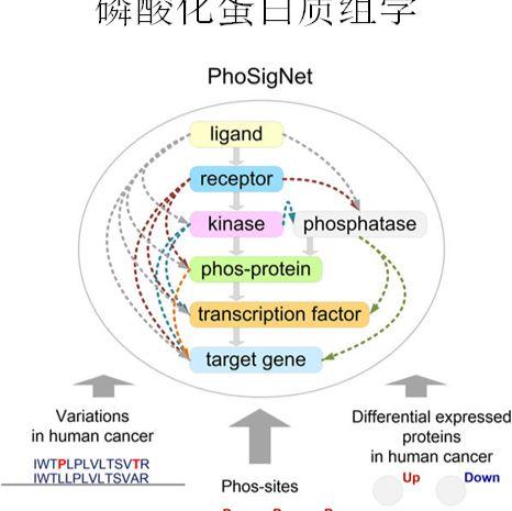 蛋白质组学