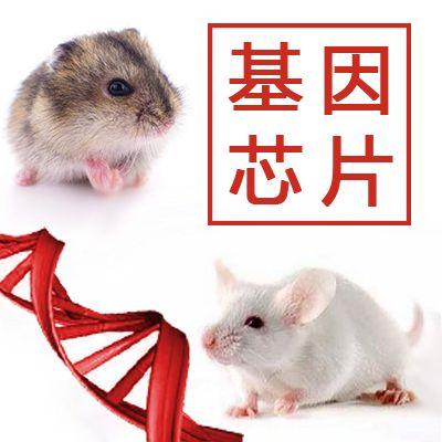 大鼠基因芯片/小鼠基因芯片