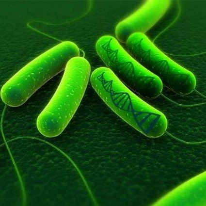 原核微生物基因组测序分析