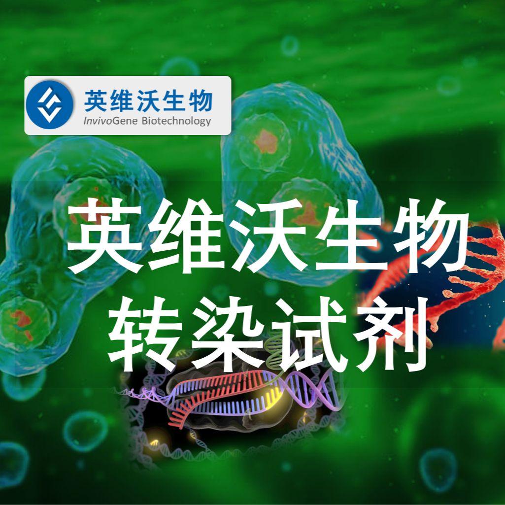 InvivoPlus™增强型动物转染试剂