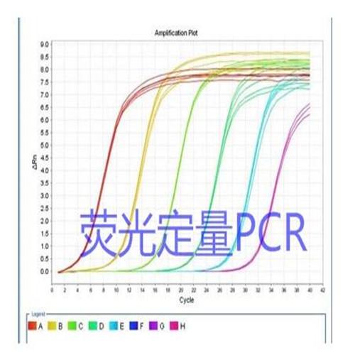 6-羧基四甲基罗丹明(单一化合物)