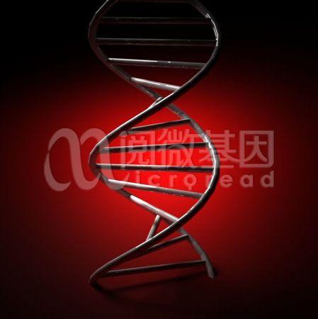 ApoE基因检测
