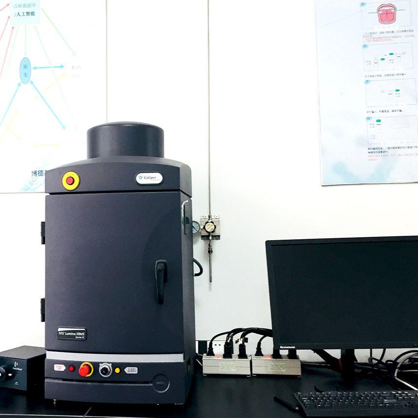 小动物活体成像 激光共聚焦实验服务 透射电镜TEM分析 扫描电镜SEM分析 影像学服务
