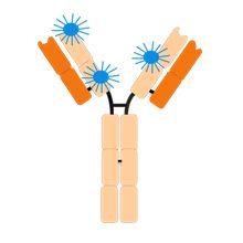 抗体标记荧光探针