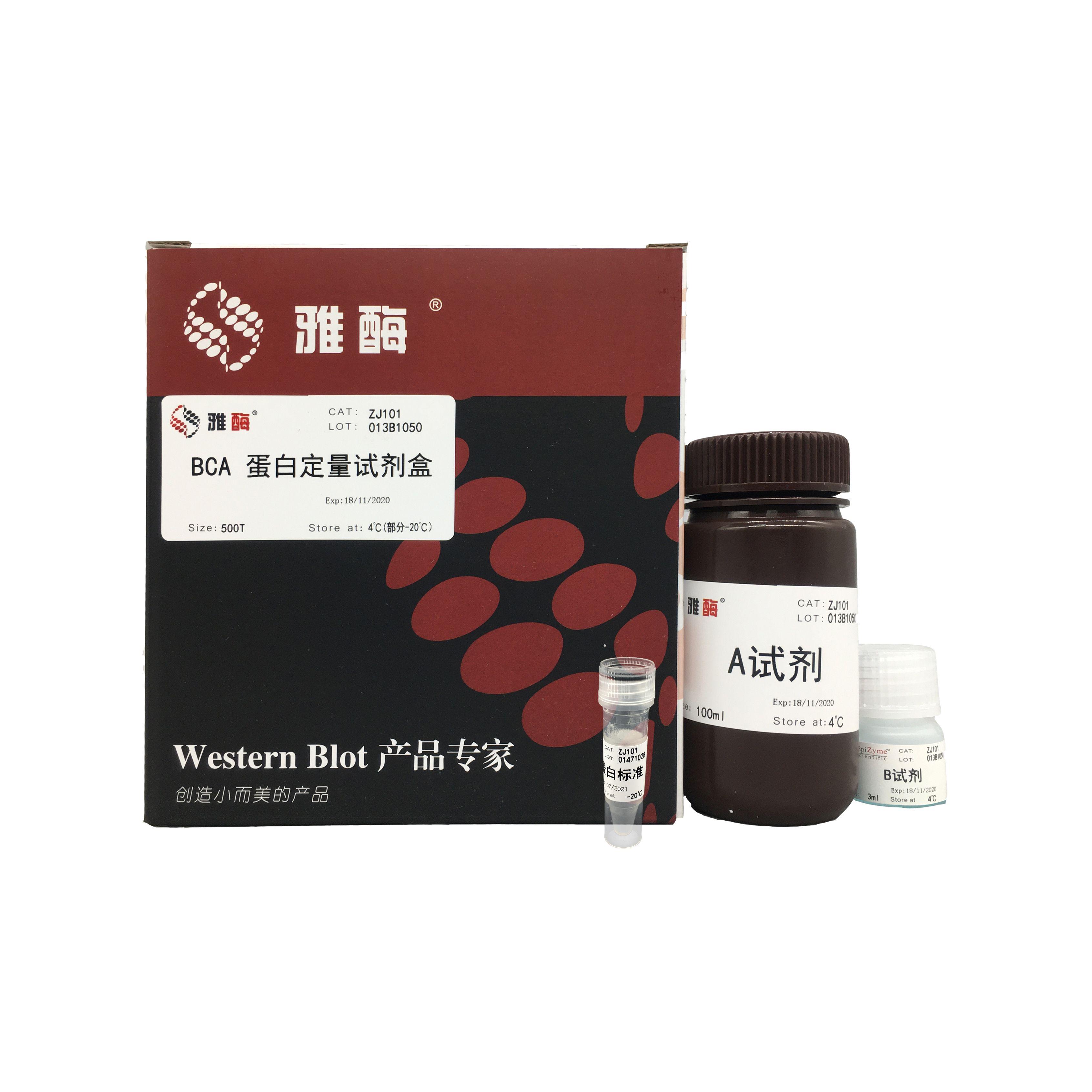 ZJ101 BCA蛋白定量试剂盒