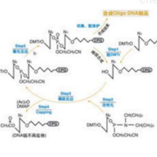 全基因合成实验技术服务