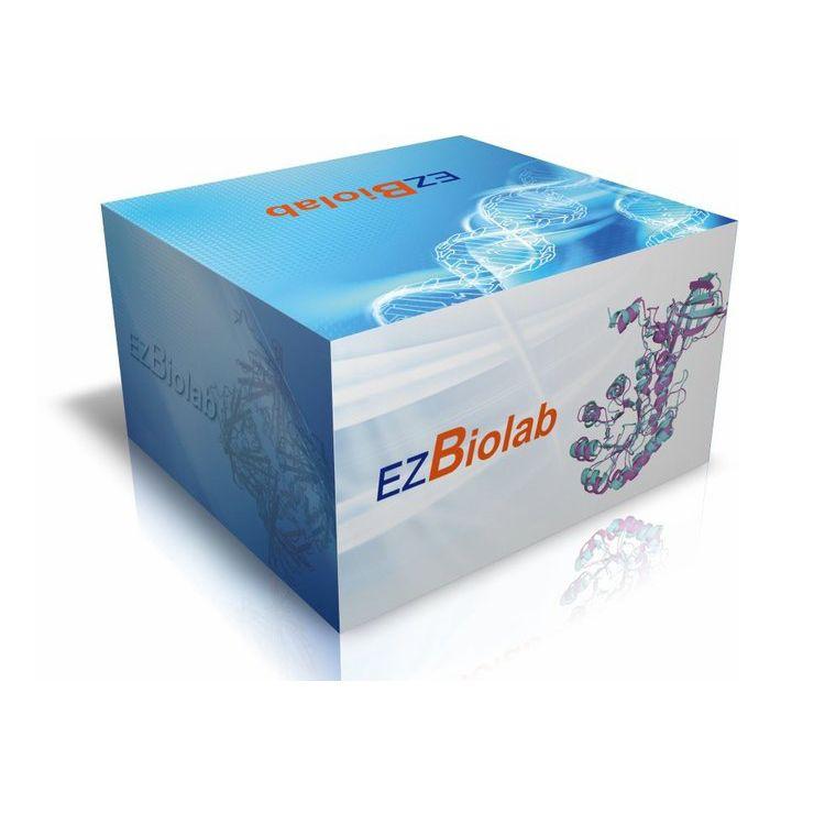 核酸非变性预制胶, 5%, 10孔