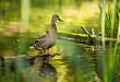 遠遠看別人殺了一次鴨子,怎么就得重癥肺炎了呢?
