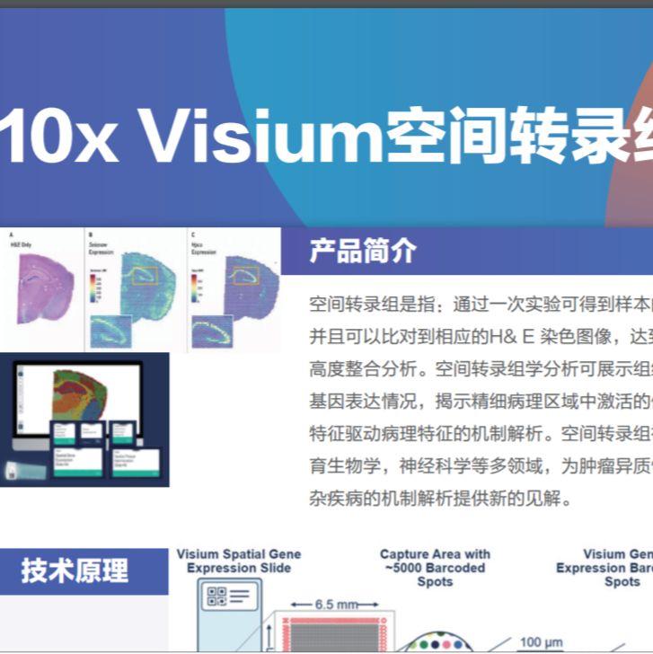 10x Visium空间转录组测序