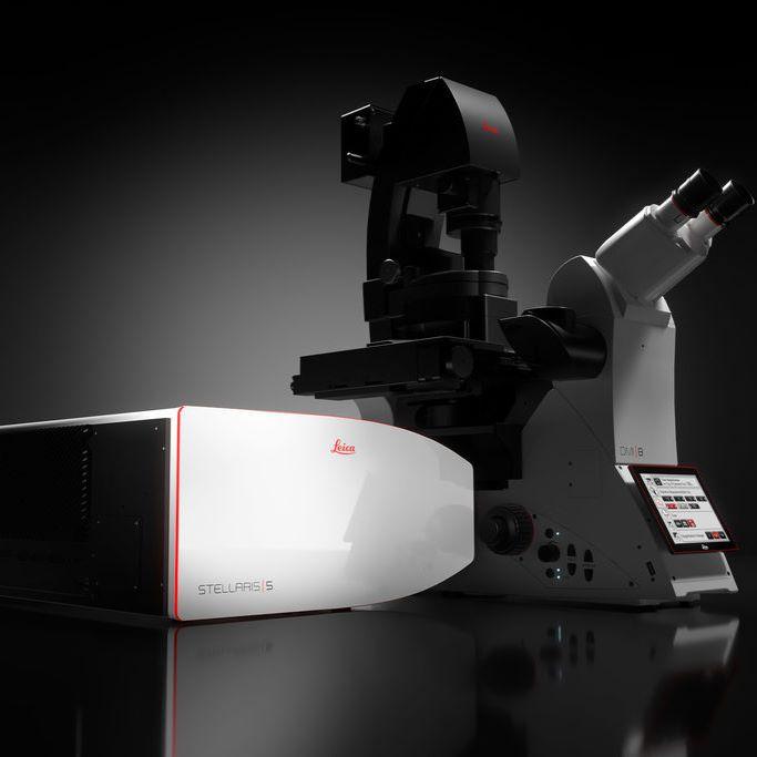 德国徕卡 共聚焦显微镜 STELLARIS 5