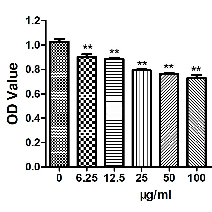 细胞增殖实验/MTT检测