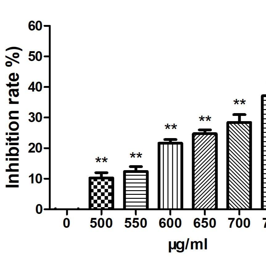 细胞增殖实验/CCK8