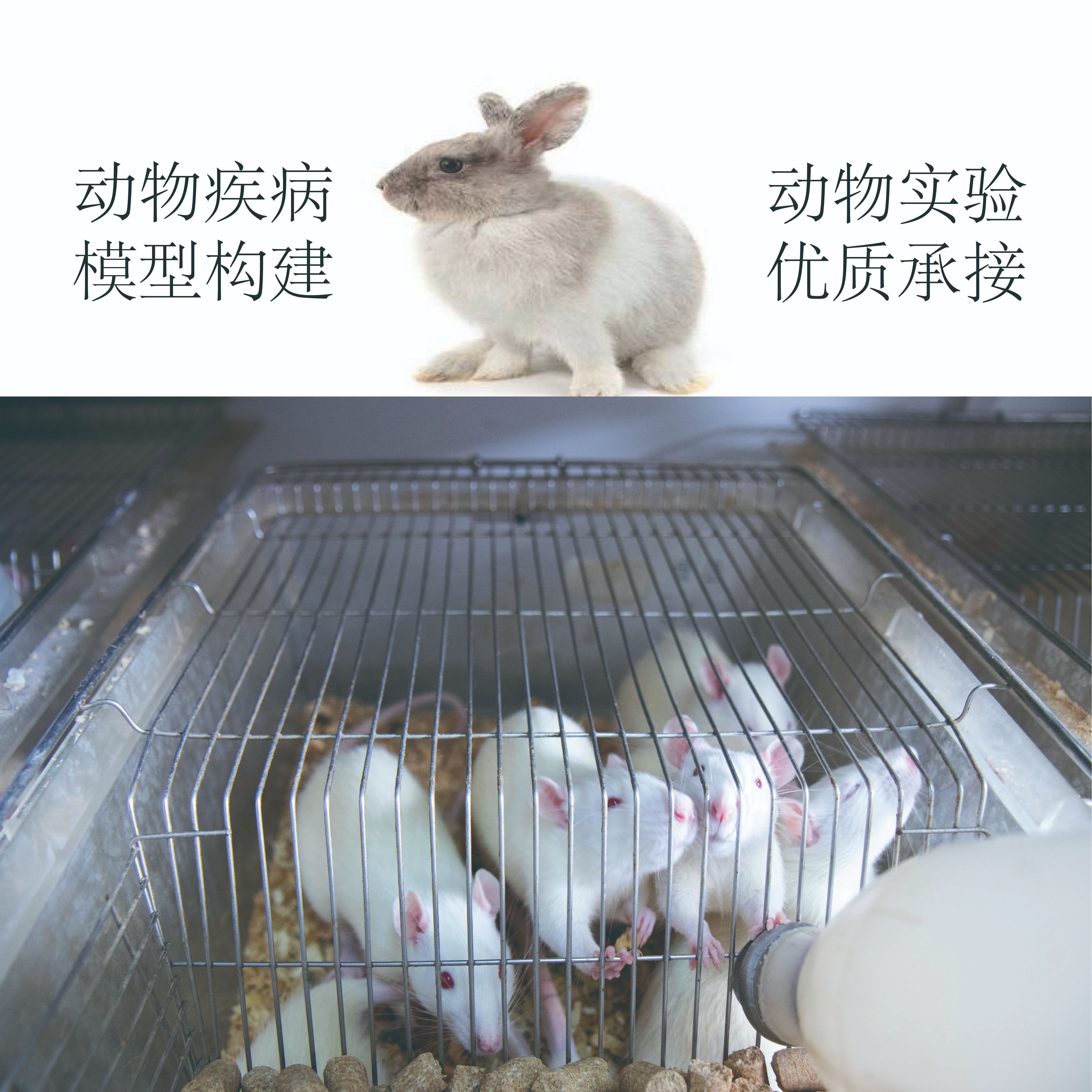 动物疾病模型构建