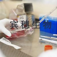 HuT78 Cells;人T淋巴瘤体外培养细胞|配套完全培养基