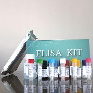 猪(Porcine)细胞因子(CCK) ELISA检测试剂盒
