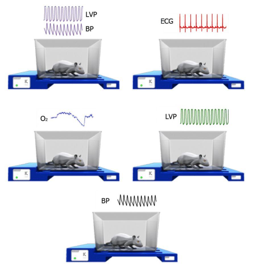 小动物生理信号遥测系统