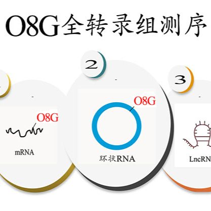 O8G RNA甲基化测序