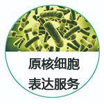 原核细胞蛋白表达服务-大肠杆菌