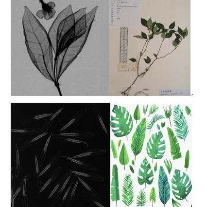 植物标本x光成像系统