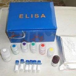 小鼠前列腺素E2(PGE2)ELISA试剂盒