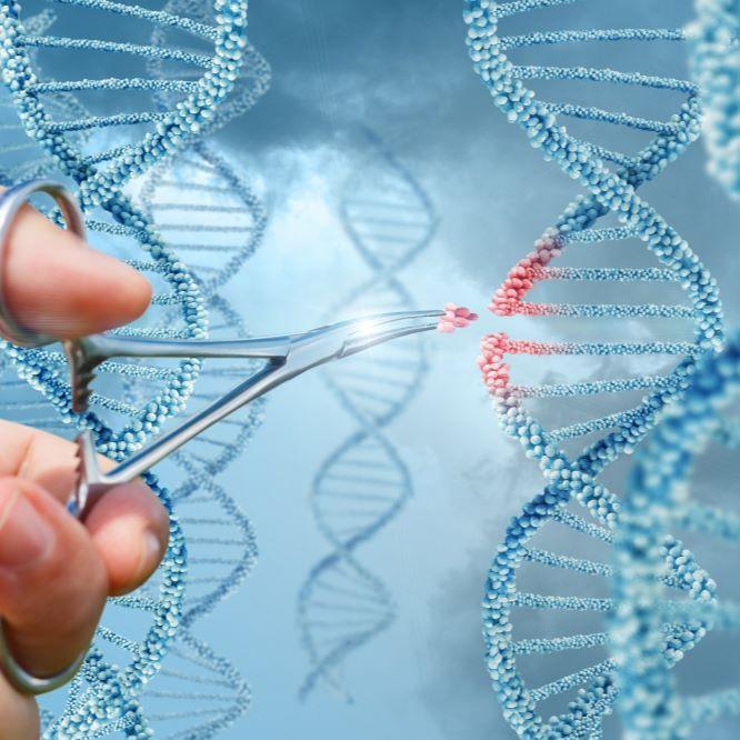 基因编辑/CRISPR/Cas9