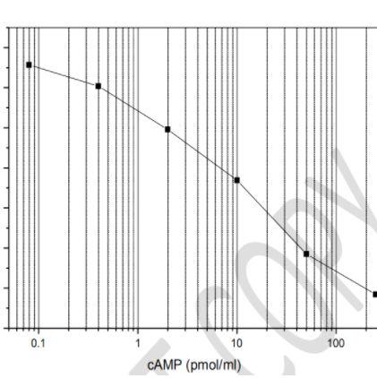 非乙酰化单克隆cAMP ELISA试剂盒
