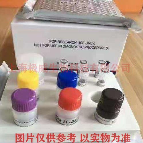 兔基质金属蛋白酶9(MMP-9)elisa试剂盒