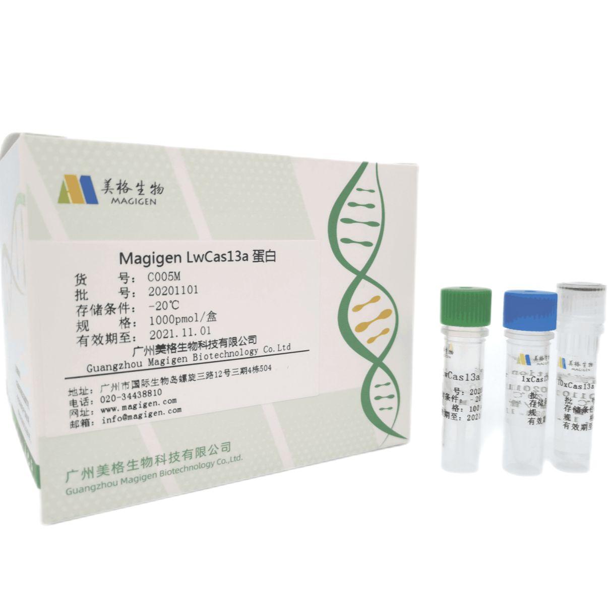 cas13a蛋白