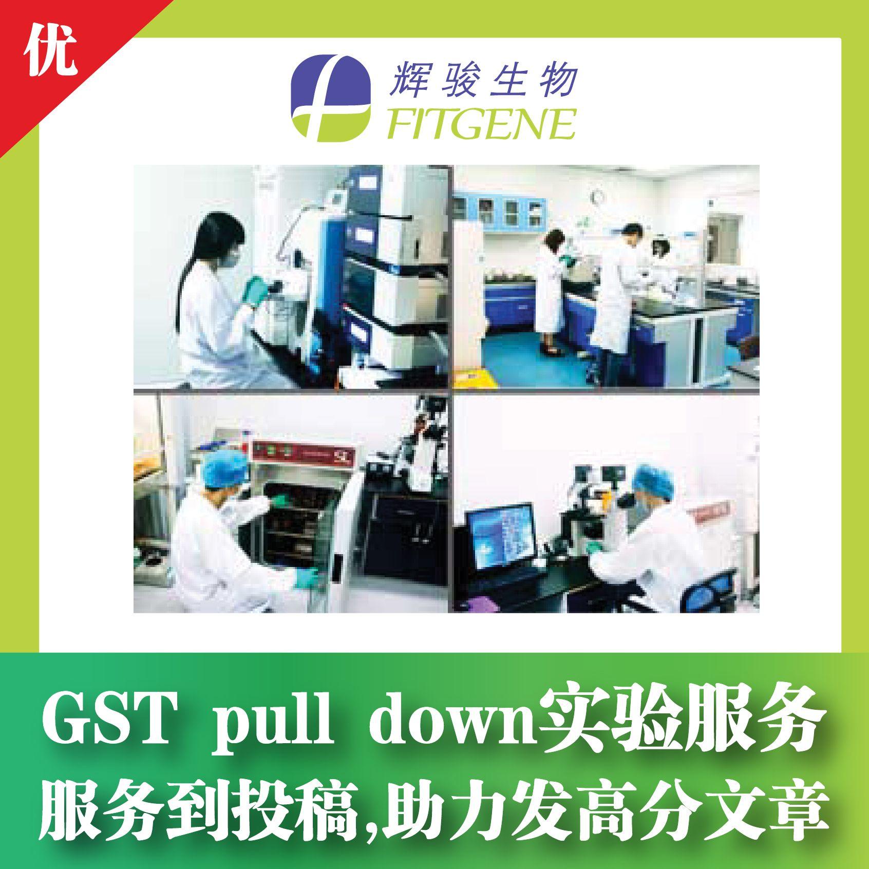 GST pulldown实验服务选辉骏—服务到投稿 / 经验丰富 / 价格低