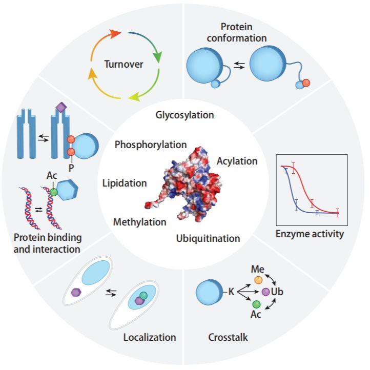 功能蛋白质组学解决方案