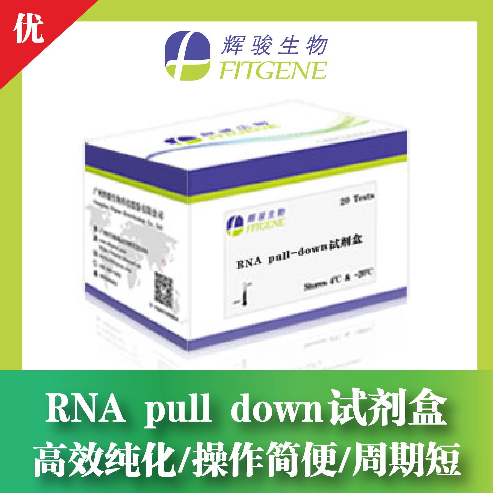 RNA pull down试剂盒—高效纯化 操作简便 周期短—辉骏生物