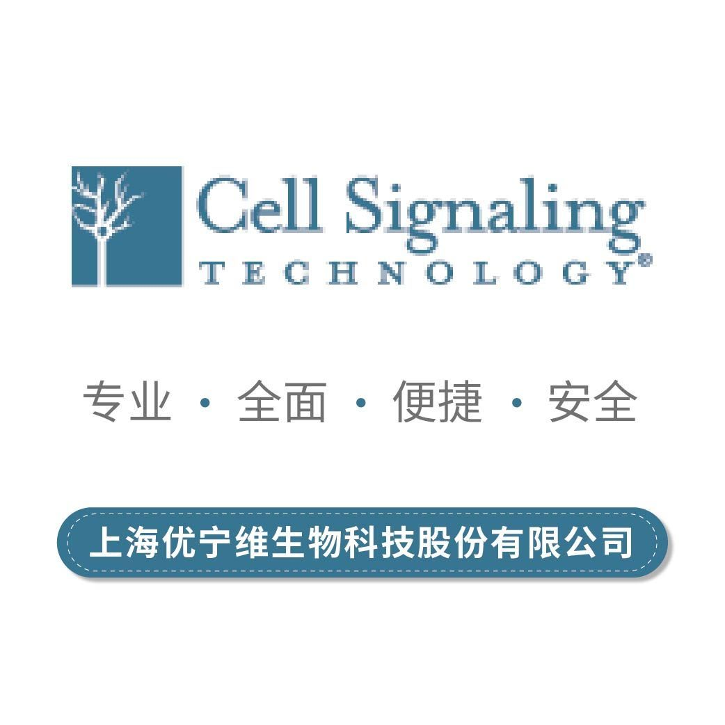 Cell Signaling CST 一抗 4695S p44/42 MAPK (Erk1/2) (137F5) Rabbit mAb