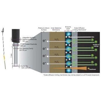 CNS生物传感器