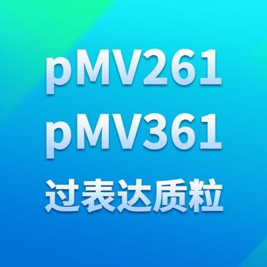 pMV261和pMV361过表达质粒
