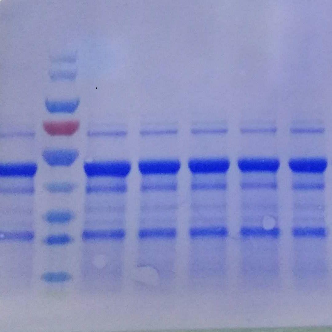 抗体免费测序