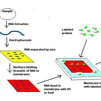 分子生物学检测