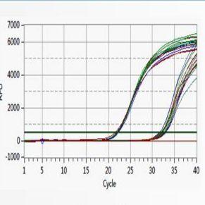 荧光定量PCR实验(realtime PCR)服务
