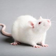 FineMag磁珠法动物组织总RNA提取试剂盒