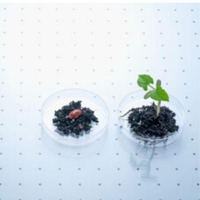 FineMag磁珠法植物基因组提取试剂盒