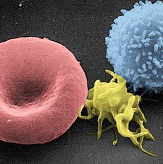 单核细胞分离系列
