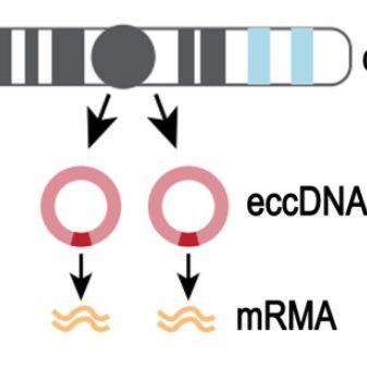 血清血浆环状DNA测序