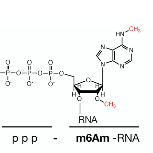 m6Am-Exo-seq lncRNA测序