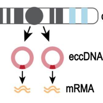 A&A Bio的环状DNA纯化柱