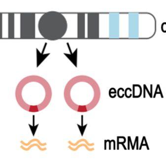 组织细胞环状DNA测序