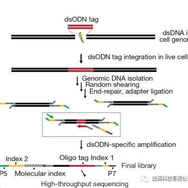 SITE-Pro高通量sgRNA筛选/高通量筛选
